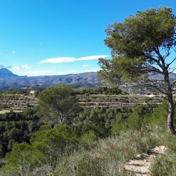 Blick auf die Sierra de Ferrer