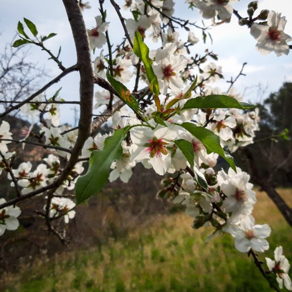 Blüten, Wandern im Hinterland