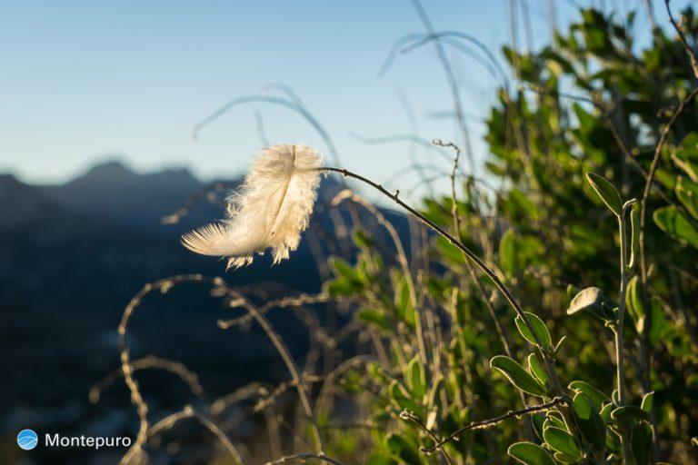 kleine Feder im Wind