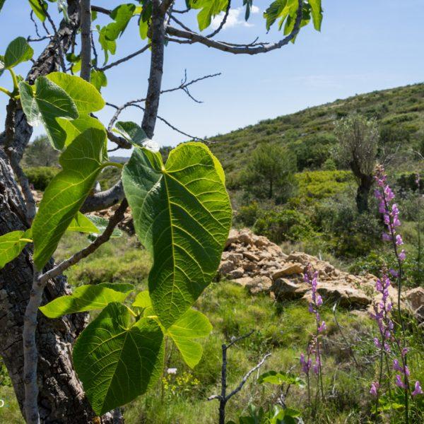 Wanderweg zwischen Bèrnia und Lloma Llarga
