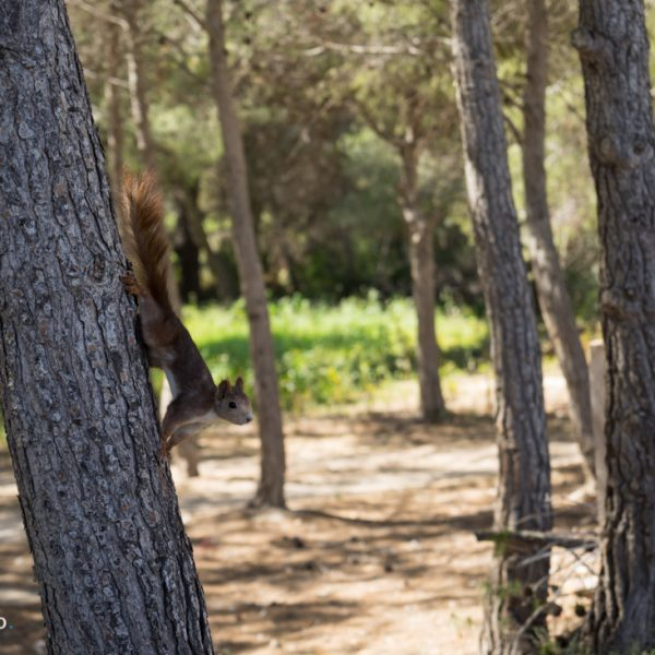 Eichhörnchen und Wandern in Calpe