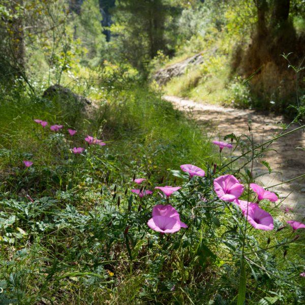 Wanderweg entlang der Schattenseite der Serra del Castell de la Solana