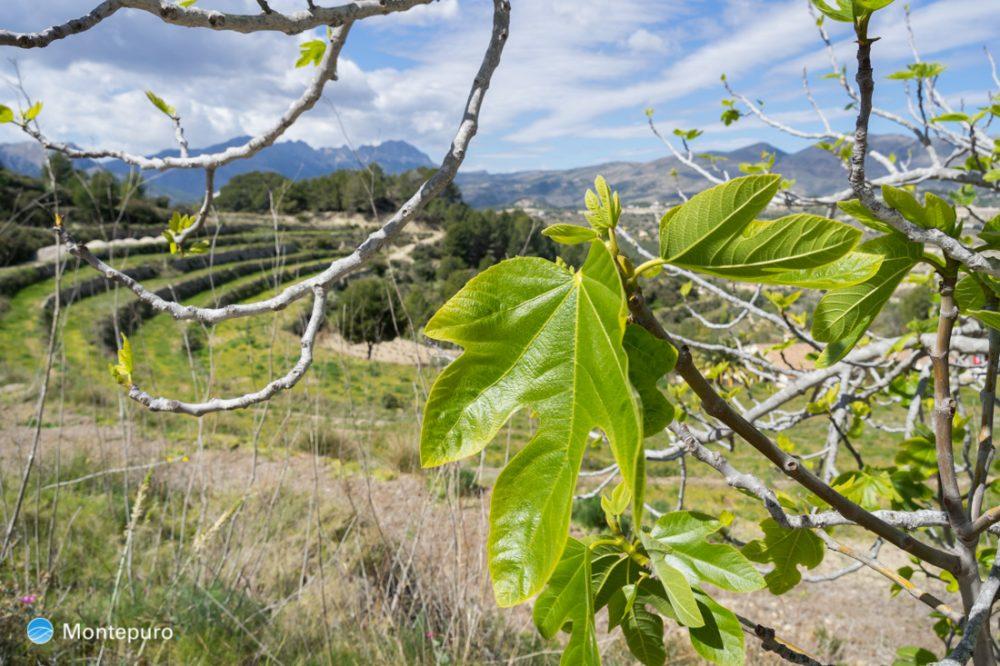 campos en la Sierra de Pedramala