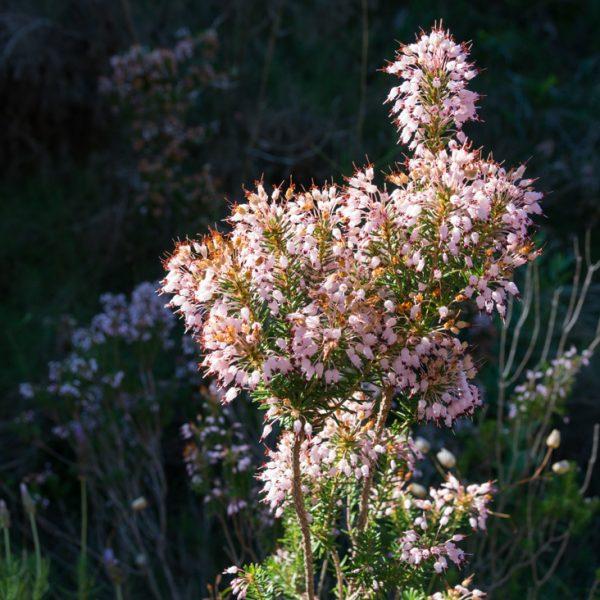 Pflanzen im Naturpark Granadella