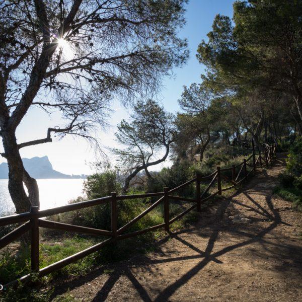 Pinienwald des Paseo Ecologico Benissa