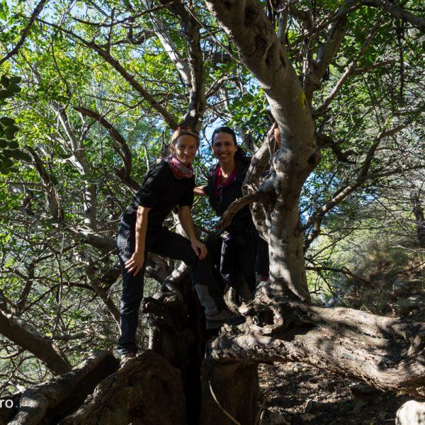 Sierra de Segària, árboles y senderismo