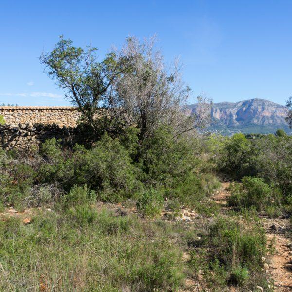 ruina del Corral del Borrell, Montgó al fondo