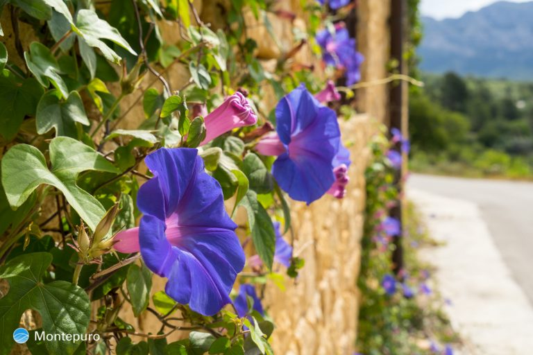 flores Hotel Casa Lehmi, senderismo Tarbena