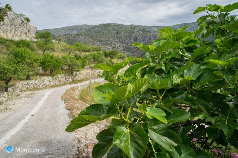 etorno rural de Tàrbena