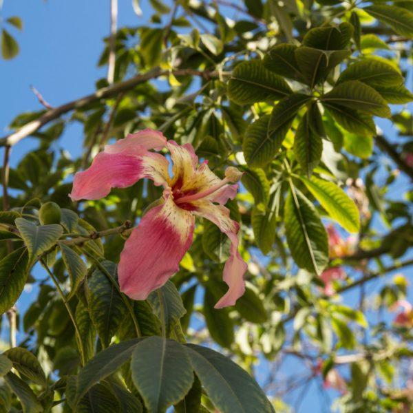 Blüten im Naturpark Parque Natural del Turia in Valencia