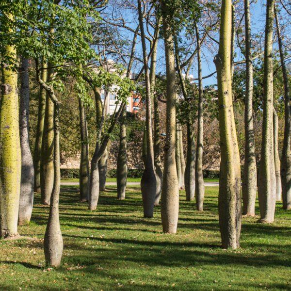 Grünflächen im Parque Natural del Turia in Valencia